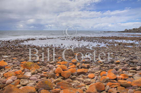 Rocky Shore and Crested Terns